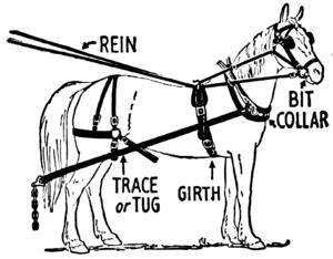 https://en.wikipedia.org/wiki/Horse_harness#/media/File:Harness_(PSF).png