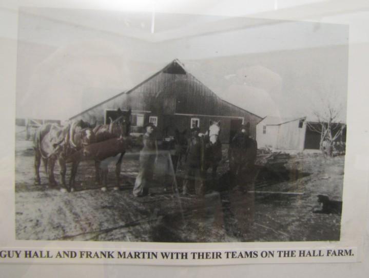 frank martin with horses at hall farm, Kansas